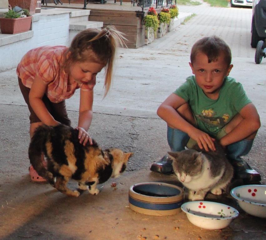 die Katzen lieben ein paar Streicheleinheiten