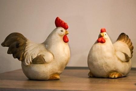 Hühner-7458