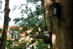 Stadtpark_Fledermaus