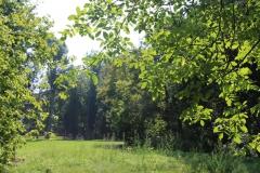 Stadtpark_Naturwiese